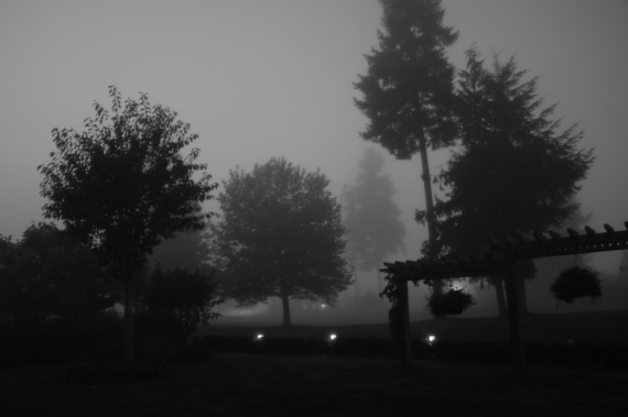 Foggy Night 2